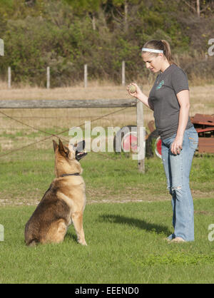 Woman playing fetch with her German Shepherd. - Stock Photo