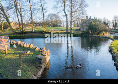 duck pond in the english village of Tissington in Derbyshire, England,Europe - Stock Photo