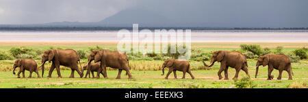 Elephant herd at Lake Manyara National Park Tanzania - Stock Photo