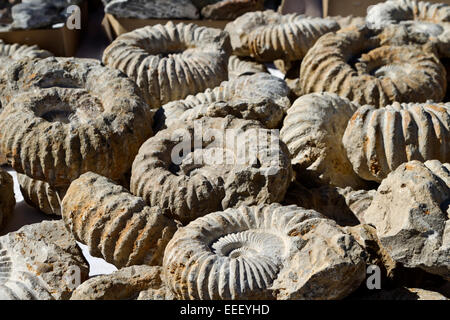 Fossils displayed for sale on outside table at Tucson Gem and Mineral Show.  The event is an international, annual - Stock Photo
