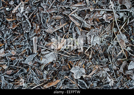 Frost covered wood chip mulch and leaves on a garden path in winter. UK - Stock Photo