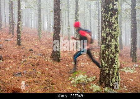 Runner training for ultra marathon race running through mist shrouded Pine forest at 6,000ft above sea level on - Stock Photo