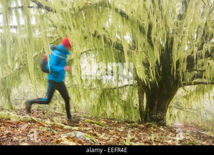 Runner training for ultra marathon race running through mist shrouded Chestnut Wood at 6,000ft above sea level on - Stock Photo