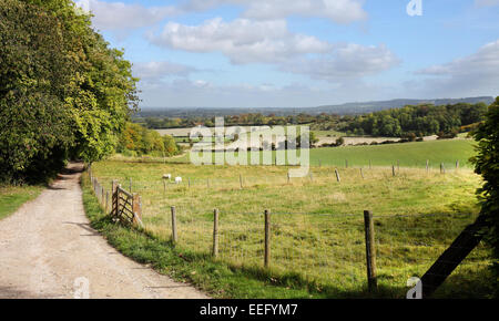 A Rural Landscape in the Chiltern Hills in England with grazing sheep and Farm track - Stock Photo