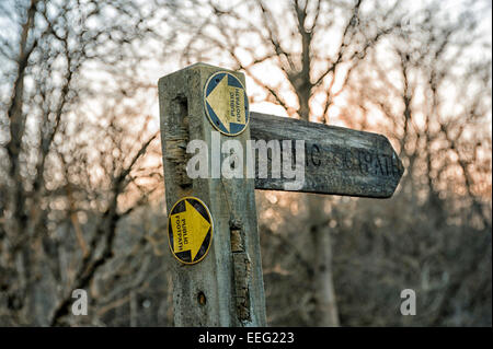 Finger post directional footpath sign against trees and winter afternoon sky - Stock Photo