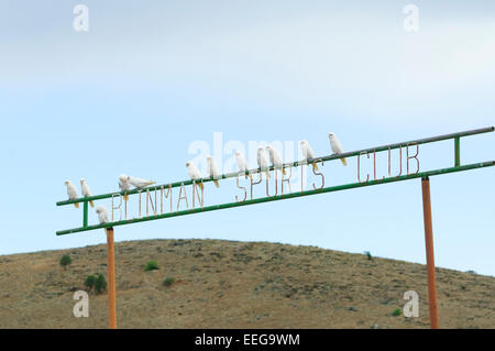 Little Corellas on a sign, Blinman, Flinders Range, South Australia - Stock Photo