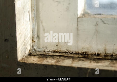 Grungy dirty old window closeup mold view - Stock Photo