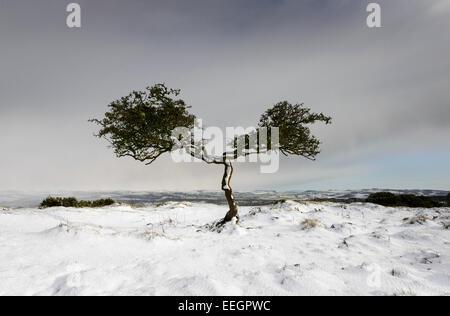 Twisted Tree - Stock Photo