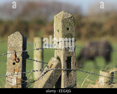 Concrete fence post with barbed wire - Stock Photo