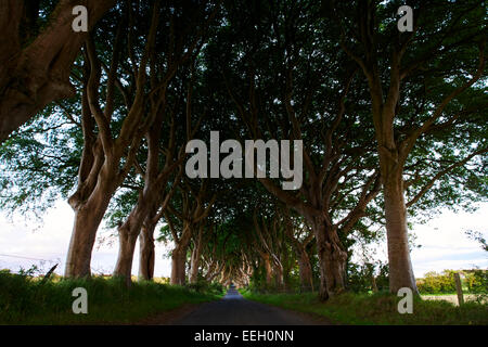 The Dark Hedges Balllymoney Ireland site of the Kings Road in Game of Thrones - Stock Photo
