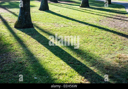 Palm trees casting shadows and lines on the grass. - Stock Photo