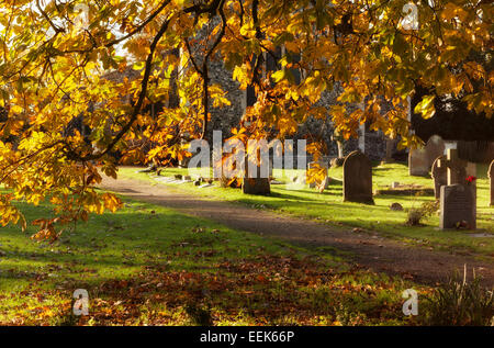 Horse Chestnut tree in a Suffolk churchyard in autumn - Stock Photo