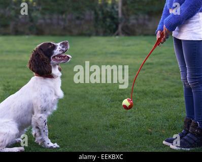 Girl Throwing Ball For Pet Spaniel Dog In Garden - Stock Photo