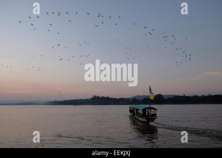 Flock of birds flying over the Mekong River in Chiang Khan district in Loei province northeast Thailand, bordering - Stock Photo