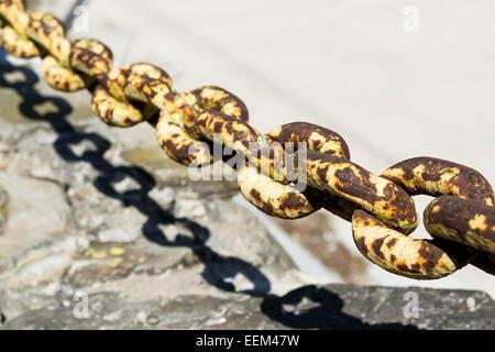 Rusty metal chain with torus shape links