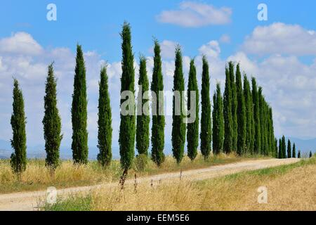 Dirt track with a cypress avenue, near Murlo, Province of Siena, Tuscany, Italy - Stock Photo