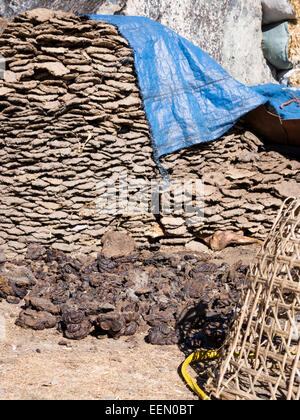 Drying yak dung for cooking and heating fuel in the high-altitude upper Khumbu region, Nepal - Stock Photo