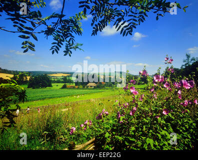 weald and downland open air museum. South Downs. West Sussex. England. - Stock Photo
