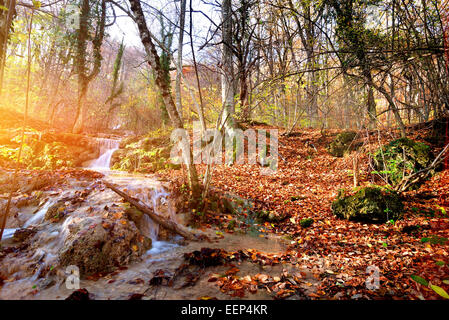 Creek in autumn mountain forest at sunrise - Stock Photo