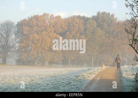Man Walking Dogs on a Frosty Morning on Hampstead Heath, London, England, UK - Stock Photo
