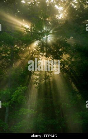 Sun rays shining through forest trees, early morning sunrise landscape in Binghamton, Broome County Southern Tier - Stock Photo