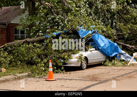 A scene is which a storm with high winds has sent a tree trunk crashing down on a car, on a residential street - Stock Photo