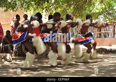 Four adult male Swazi dancers in colourful dress performing warrior dance during culture show for foreign tourists - Stock Photo