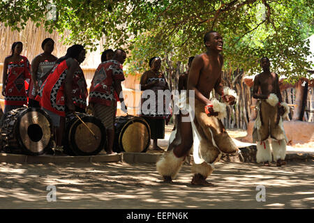 Adult male Swazi dancer in warrior dress performing traditional war dance with musicians and singers entertaining - Stock Photo