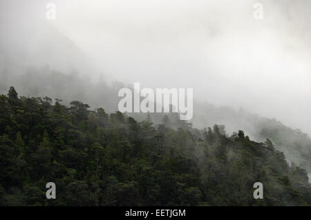 Cloud gathers over Beechwood forest, Milford Sound, New Zealand. - Stock Photo