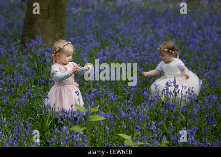 Two children picking bluebells in an English wood in Spring. - Stock Photo