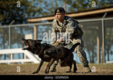 US Air Force Staff Sgt. Mark Devine prepares to release JJany during a controlled aggression training exercise at - Stock Photo