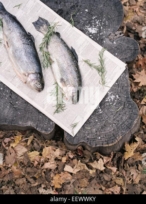 Two fish lying on a tree trunk. - Stock Photo