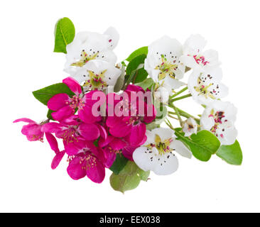 Blossoming apple and cherry  tree flowers with green leaves against white background - Stock Photo