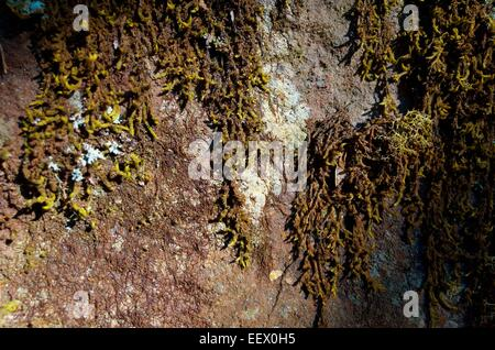 Rock face covered in moss and lichen. - Stock Photo