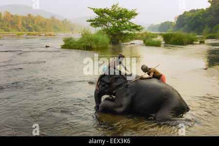 Trainers bathe young elephants at dawn in the river Periyar, a major river in Kerala. - Stock Photo