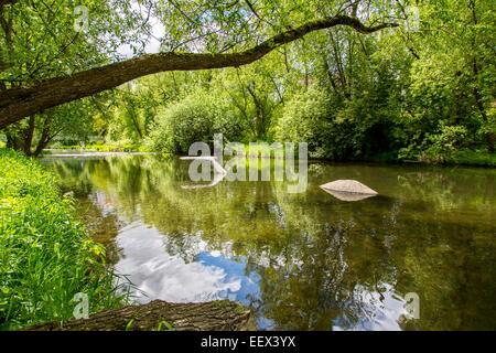 River Ruhr in Arnsberg, Sauerland region,  Artwork 'Ruhr Whale' sculpture in the river - Stock Photo