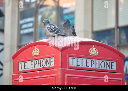 A pair of pigeons sat atop a public telephone box. - Stock Photo