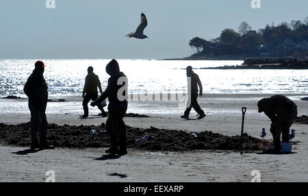 Anglers dig for clams along the beach in West Haven for fishing for Stripers on Monday afternoon. - Stock Photo