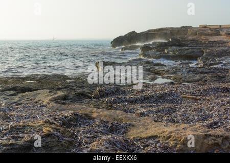 Seaweed on rocky seashore and choppy seas, Majorca, Spain. - Stock Photo