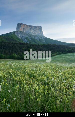France Isere Parc Naturel Regional du Vercors (Vercors Natural Regional Park) the Mont Aiguille (2086 m) viewed - Stock Photo
