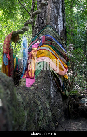Tree of Ghosts bandaged colored textiles - Stock Photo