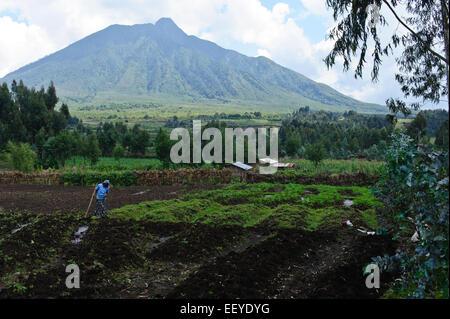 Volcanoes National Park in Kinigi.  Mt. Sabyinyo .Rwanda. - Stock Photo