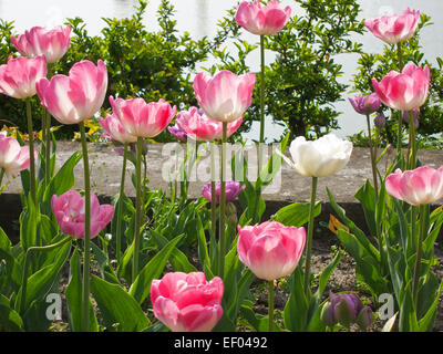 Flowers in spring. - Stock Photo