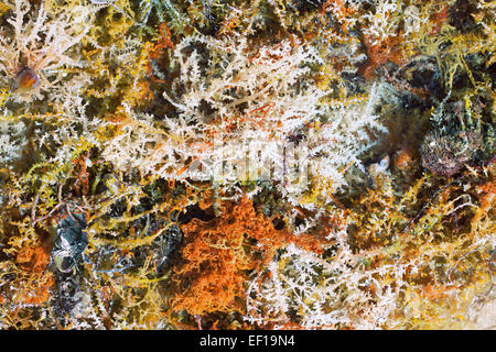 Soft corals background of Red Sea - Stock Photo