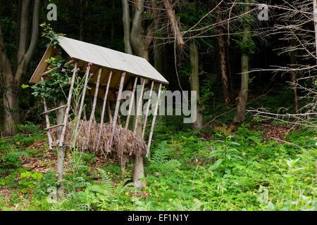 Animals feeder in forest - Stock Photo
