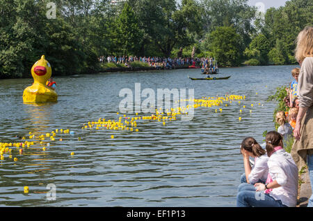 Rubber duck fun race on river Ruhr, individual styled rubber ducks by kids, - Stock Photo