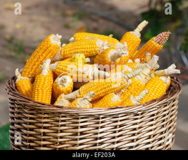 ripe corn in basket close up - Stock Photo