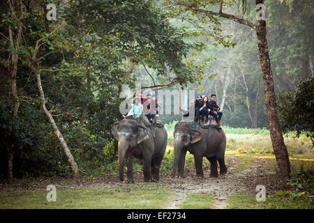 Tourists on jungle safari by elephant - Chitwan National Park - Nepal. - Stock Photo