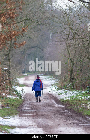 Elderly woman walking along a snow path in a woodland setting and using a walking stick.. - Stock Photo