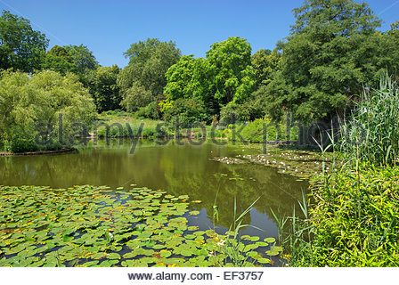 Garden pond with water plants germany stock photo for Plants for fish pond surrounds